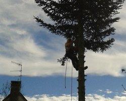 Pava Paysage - Mellecey - Elagage